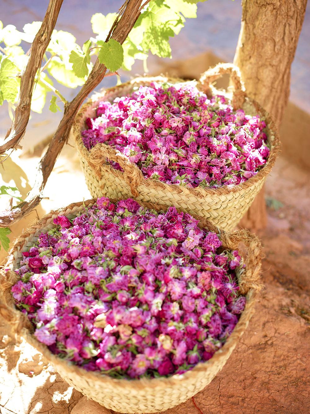Kosmetyki różane łagodzą i uspokajają